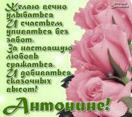 антонине