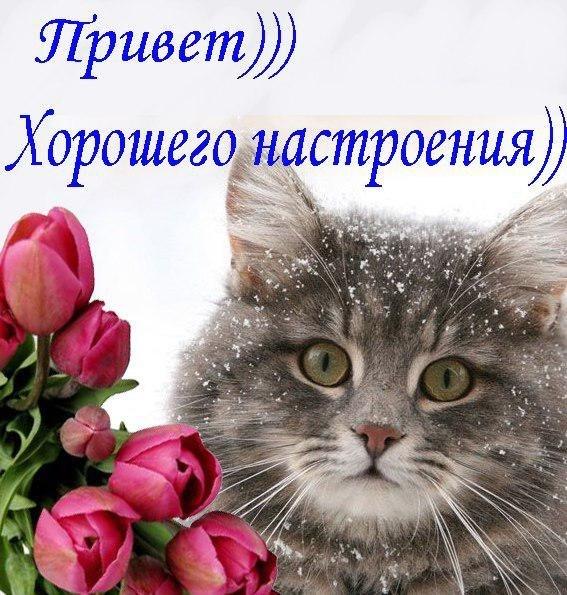 Привет))) Хорошего настроения)))
