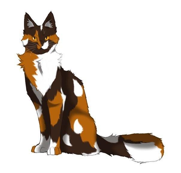Коты воители огнезвезд фото - 213eb