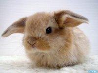 фото зайчиков маленьких