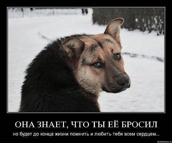 http://cs314.vkontakte.ru/u13918298/101734579/x_babe492a.jpg