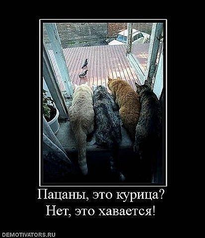 http://cs314.vkontakte.ru/u13918298/101734579/x_cbe17743.jpg