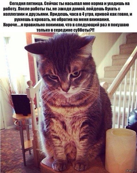 Мысли кота в пятницу