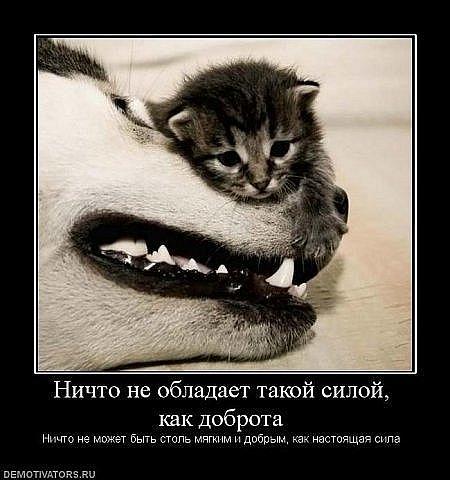http://cs315.vkontakte.ru/u13918298/101734579/x_a0280148.jpg