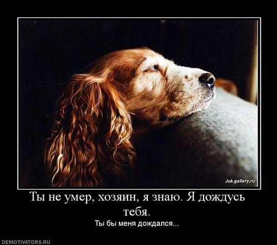 http://cs315.vkontakte.ru/u13918298/101734579/x_e1876d93.jpg