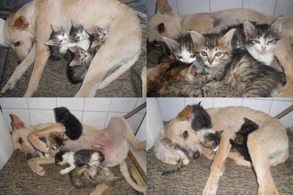 Кошки и прочие забавные животные  - Страница 4 AcrtymqiiCg