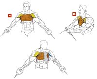 Сведение рук в кроссовере через нижние блоки, основные задействованные мышцы.