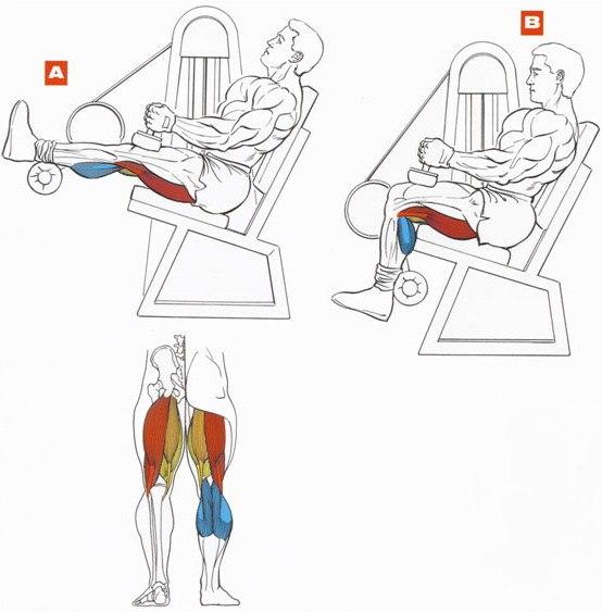 Как быстро накачать нижнюю часть ног в домашних условиях