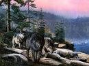 стая. река. обрыв. голосов: 0). Ключевые теги. волки. камни.