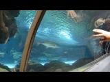 Океанариум в Астане 3