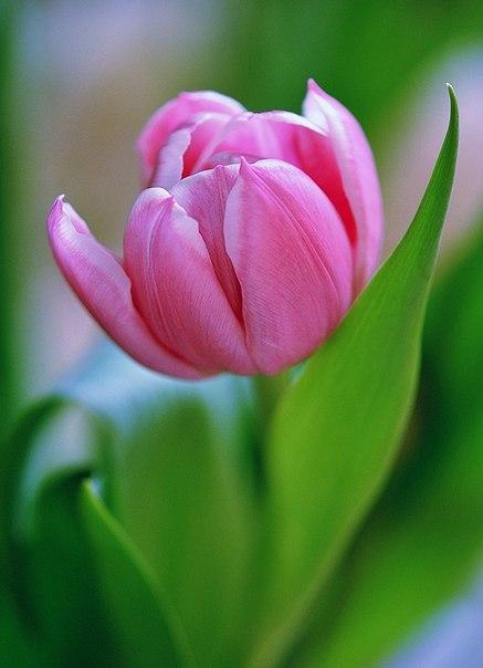 цветы --это нежность .любовь .чувства .восторг