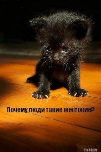 Маленькай Катёнок, 9 декабря , Одесса, id42850981