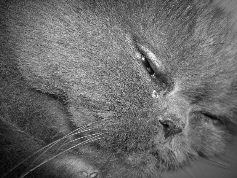 досок котенок в слезах картинки осталось так много