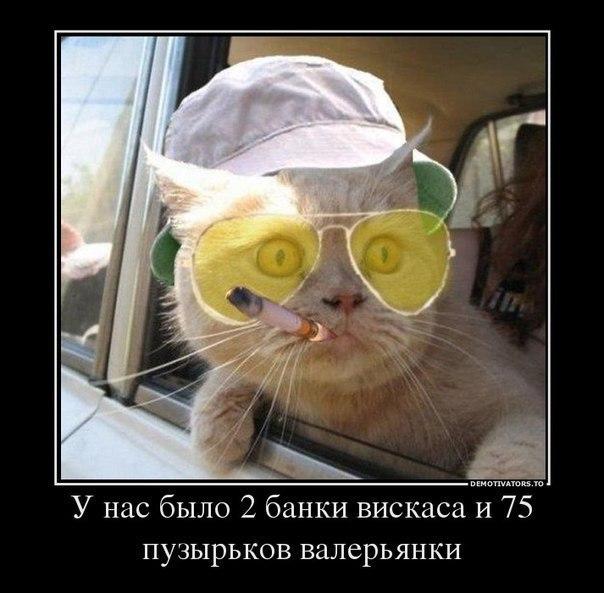 http://cs317025.userapi.com/v317025692/6159/8CaY3OM6HIQ.jpg