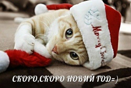 """Климкин считает нынешнюю ситуацию на Донбассе """"гибридным перемирием"""" - Цензор.НЕТ 7399"""