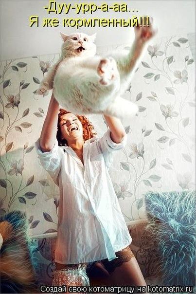 Самый милый котэ