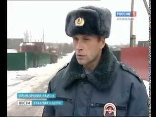В Архангельске бродячие псы разорвали пенсионерку