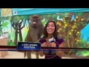 Full} Baboon Gropes TV Reporter's Breasts On Air! | Monkey Grabs Female Breasts And Smiles - YouTube
