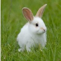милые кролики картинки