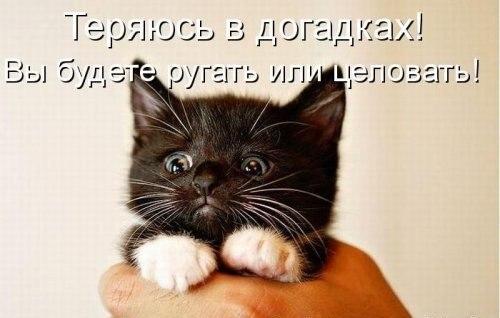 http://cs317919.userapi.com/v317919707/441a/R6pPe3SqDkE.jpg