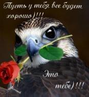 С добрым утром.Хорошего дня  Кофе в чашке стынет Умывается пушистый рыжий кот. За окном на небе ярко синем Начинает солнце свой обход.  Утро доброе. И день пусть будет славным, Добрым и хорошим для тебя, Чтобы лишь от радости и счастья У тебя кружилась голова. Счастья,любви,))!!!!