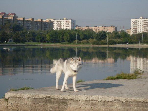 http://cs323.vkontakte.ru/u80552708/108852320/x_e08604d2.jpg