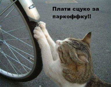 http://cs352.vkontakte.ru/u19129154/45988253/x_85e7fdd6.jpg