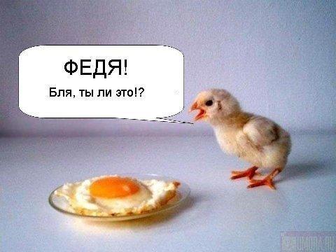 http://cs352.vkontakte.ru/u19129154/45988253/x_d75959d8.jpg