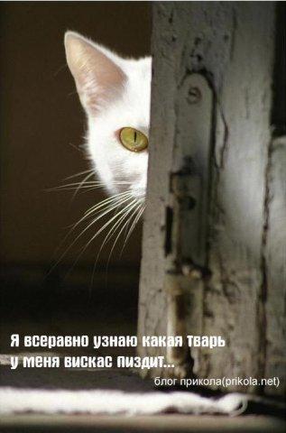 http://cs352.vkontakte.ru/u19129154/45988253/x_e8e506ca.jpg