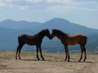 конный - Нужные схемы и описания для всех.
