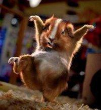 Hamster Wild, Кричев