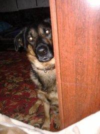 Собака Джек
