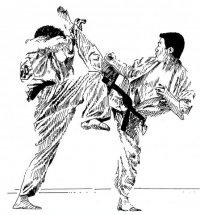 картинки шинкиокушинкай каратэ