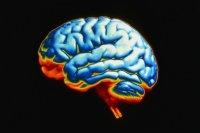 Собственным Мозгом