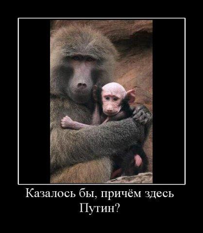 http://cs4306.vkontakte.ru/u2890153/62763215/x_846634da.jpg