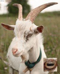 Сексуальная коза фото фото 716-830