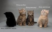 Dasha Katina