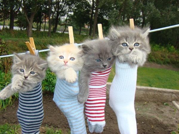 Прикольные картинки с котами и надписями про школу