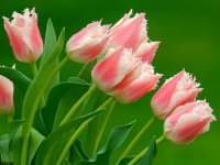 Цветок Аленький, 29 июня , Омск, id75778291