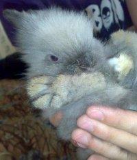 Rabbit Fufka, Санкт-Петербург, id21074589