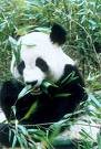 Ding Nan, 9 июня , Бугульма, id44813243