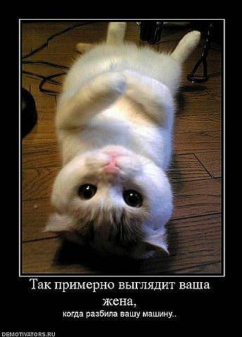 http://cs4392.vkontakte.ru/u5319939/105588660/x_2dd6468d.jpg