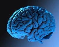 Мозг Старицына