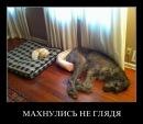 Alexey Biryukov фото #48
