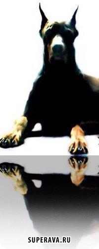 El Diablo, 15 октября 1992, Казань, id42139773