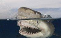 Экстримальный дайвинг с акулами.