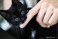 Кошка Няшка, 10 апреля 1992, Херсон, id165167355