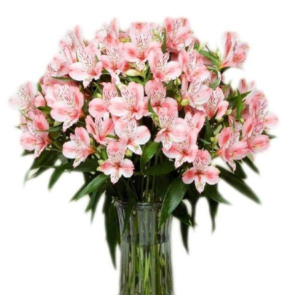 Розы и тюльпаны, цветы с доставкой, подарки, интернет-магазин.