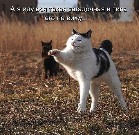 http://cs4440.vkontakte.ru/u2037648/124377535/x_0f0166f3.jpg