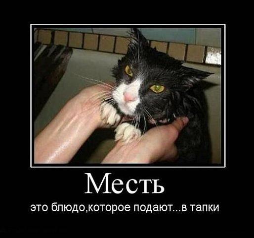 http://cs4440.vkontakte.ru/u2037648/124377535/x_531644a4.jpg